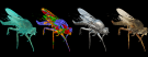 3D Insects from ZooSphere Image Sets