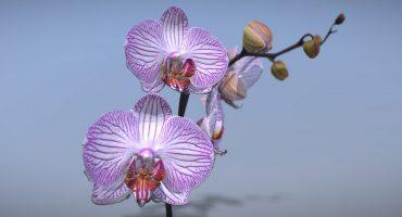 orchid flower photogrammetry header