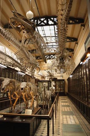 la plata museum comparative osteology