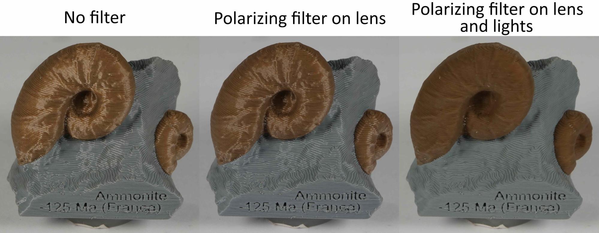 photogrammetry 3d scan cross polarization
