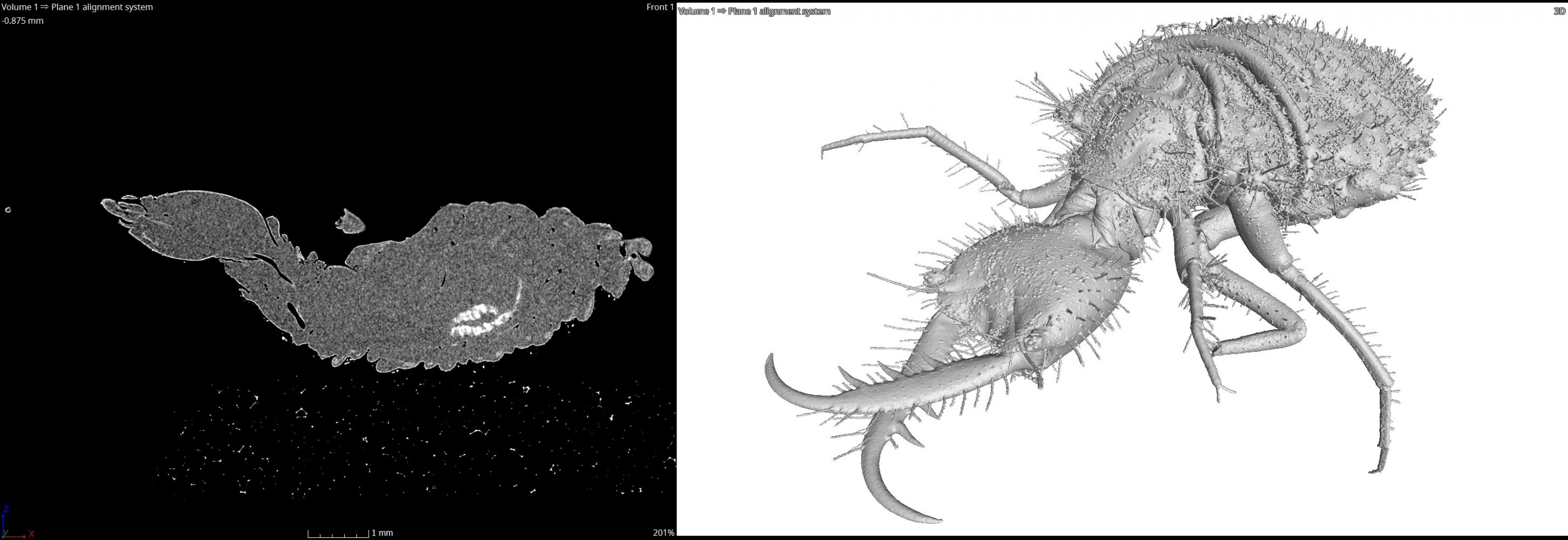 Using a CT Scanner to Create a Virtual Zoo