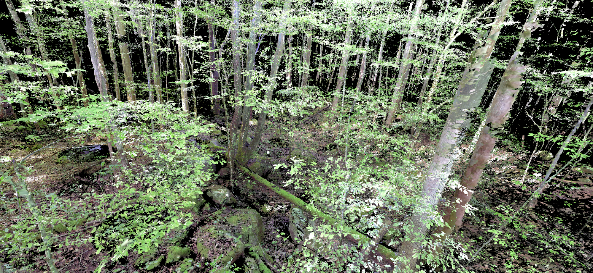 atticus stovall 3d forest data