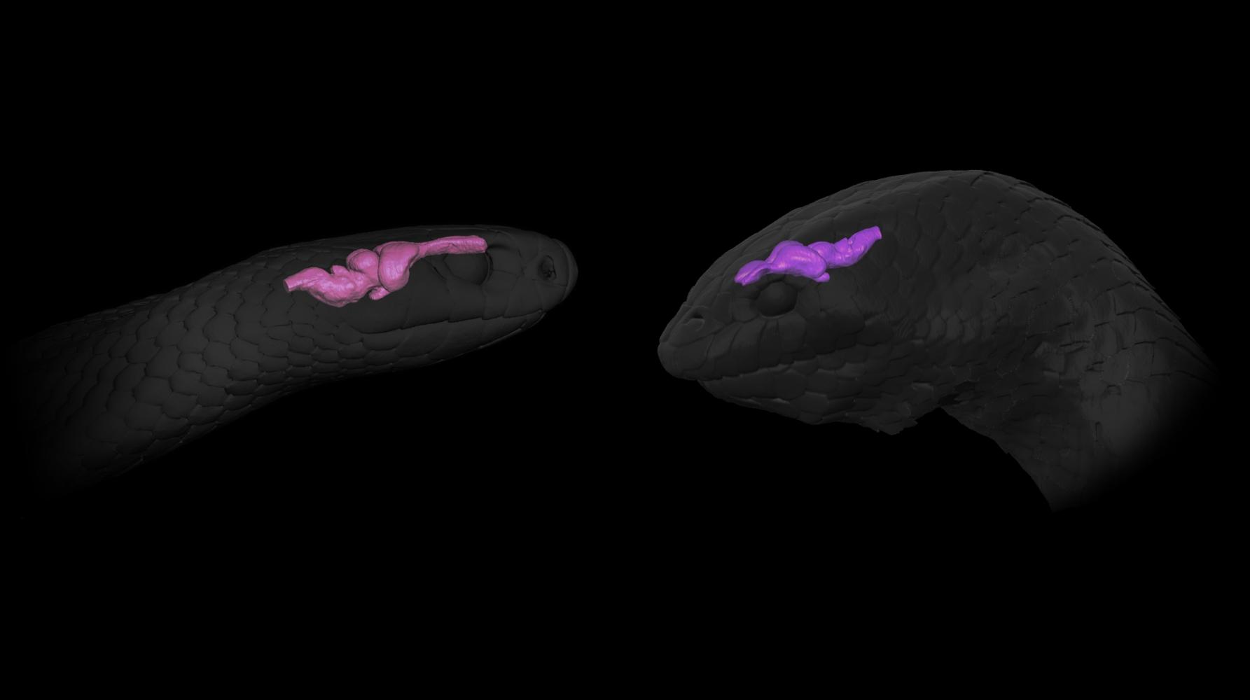 land snake sea snake brains
