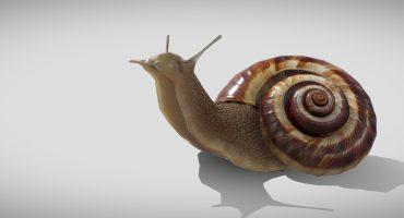 art spotlight snail