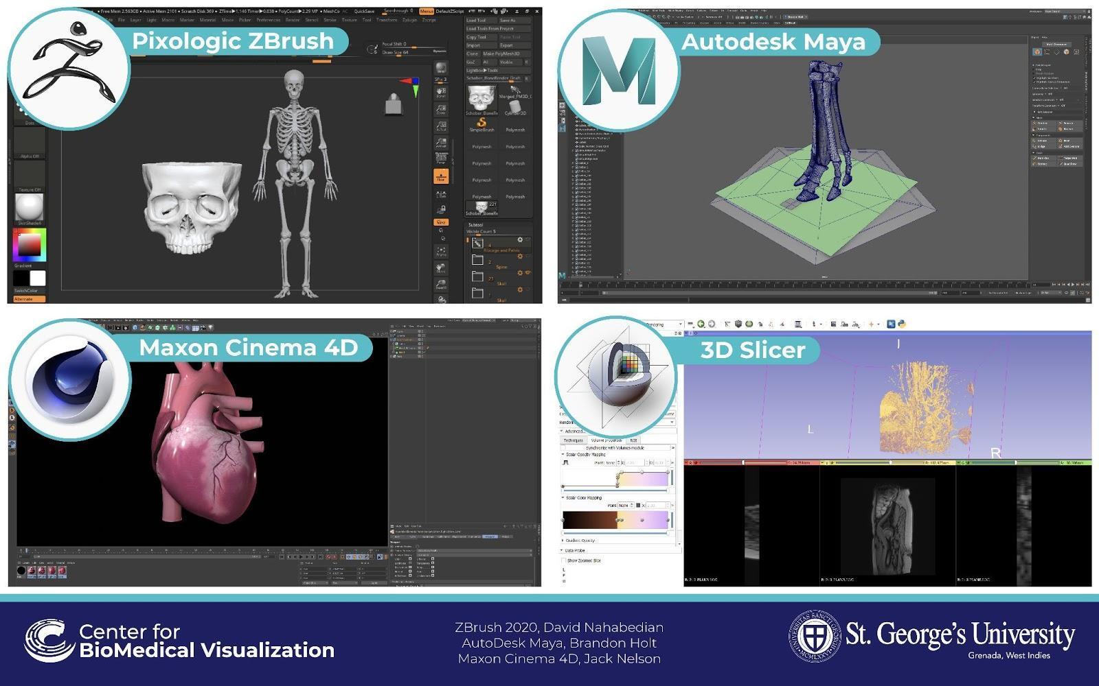 anatomical 3d models