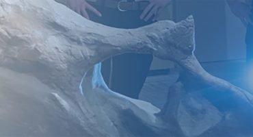 university of colorado archaeozoology spotlight